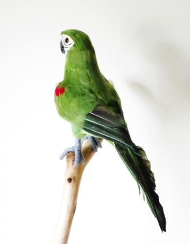 perroquet vert suissevents est votre d corateur d 39 v nements. Black Bedroom Furniture Sets. Home Design Ideas
