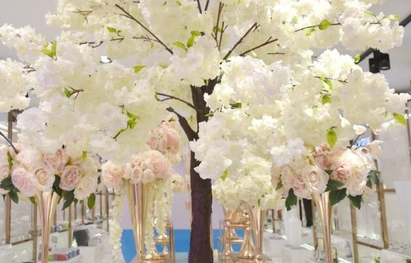 Arbre Cerisier blanc
